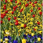 Mittwochsblümchen 21.04.21