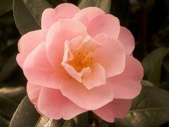 Mittwochsblümchen 3