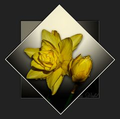Mittwochsblümchen