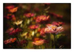 Mittwochsblümchen am Dienstag