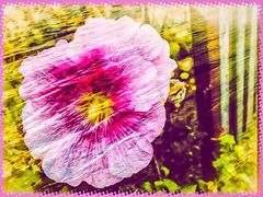 Mittwochsblümchen- Am Gartenzaun