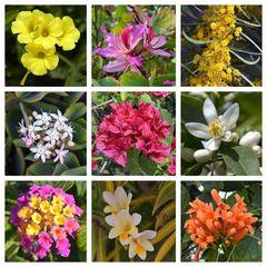 Mittwochsblümchen aus dem Süden