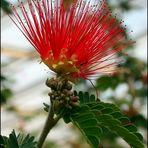 Mittwochsblümchen aus dem Wüstenhaus