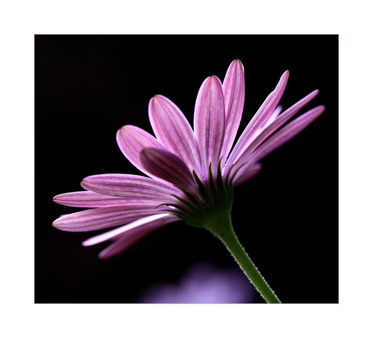 Mittwochsblümchen aus der Mottenkiste