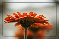 Mittwochsblümchen, aus einer anderen Perspektive