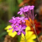 Mittwochsblümchen aus