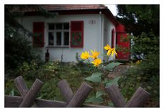 Mittwochsblümchen aus Hellerau