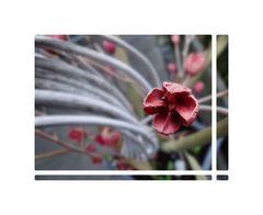Mittwochsblümchen aus Holz