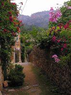 Mittwochsblümchen aus Mallorcas Bergen