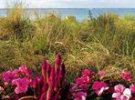 Mittwochsblümchen- Blumen am Strand