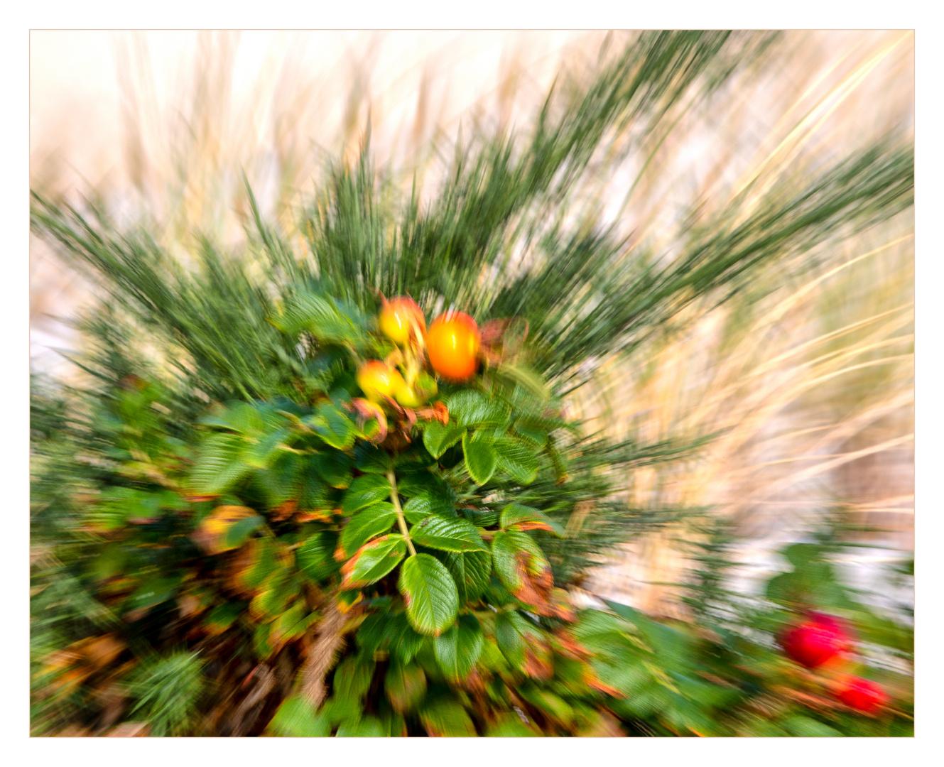 Mittwochsblümchen bzw.... früchtchen