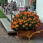 Mittwochsblümchen - dekorativer Blumenschmuck