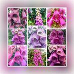 Mittwochsblümchen- Digitalis