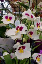 Mittwochsblümchen: Etwas Farbe braucht der Fotofreund ...