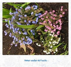 Mittwochsblümchen- Farbtrilogie