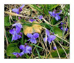 Mittwochsblümchen- Frühlingspflanzen