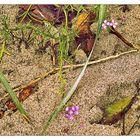 Mittwochsblümchen- Meersenf