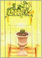 Mittwochsblümchen- Mein kleiner grüner Kaktus