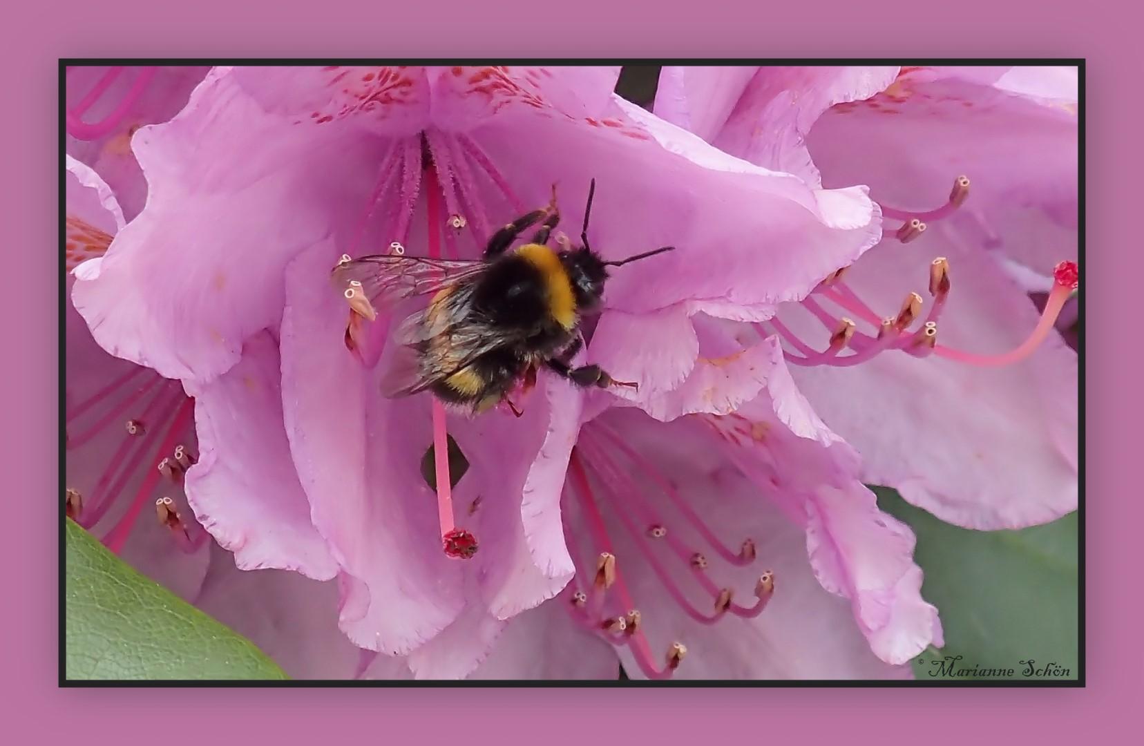 Mittwochsblümchen mit Brummelchen