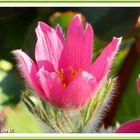 Mittwochsblümchen  (mit Gedicht)