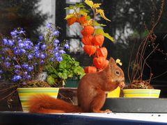 Mittwochsblümchen mit Hörnchen.....