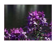 Mittwochsblümchen mit Mosel im Hintergrund