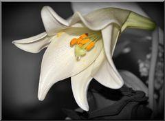 Mittwochsblümchen mit Träne