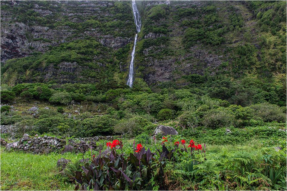 Mittwochsblümchen mit Wasserfall