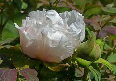 Mittwochsblümchen mit Zecke