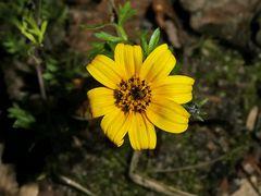 Mittwochsblümchen: Noch im Garten...
