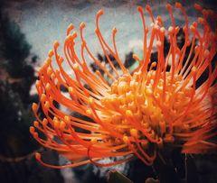 Mittwochsblümchen- Oranges Blümli