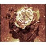 Mittwochsblümchen- Rosenarrangement
