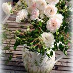 Mittwochsblümchen- Rosendauerblüher ...
