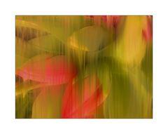 Mittwochsblümchen- Transparent