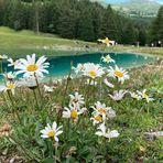 Mittwochsblümchen von der Lenzerheide.