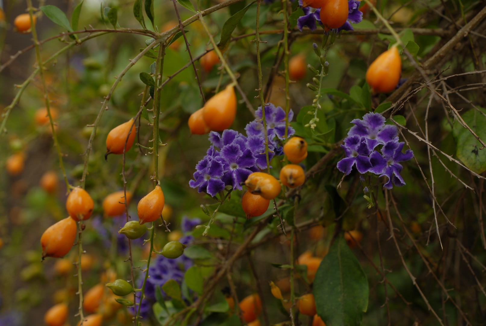 Mittwochsblümchen von Gran Canaria