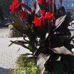 Mittwochsblümchen vor dem Rathaus in  Bayreuth 11.09.2019
