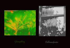 Mittwochsblümchen- Wandel der Jahreszeiten
