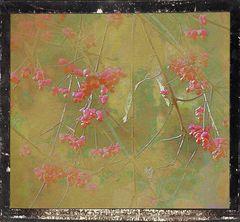 Mittwochsblümchen- Wiedermal Pfaffenhütchen