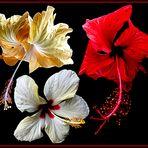 Mittwochsblümchen- Zauberhafte Blüten