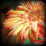 Mittwochsblümchen - zweifarbig