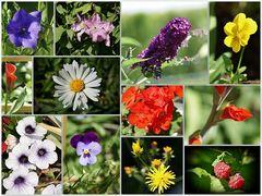 Mittwochsblümchen...ganz viele!