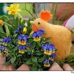 Mittwochsblümenchen, kurz vor Ostern