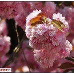 """""""Mittwochsblütchen""""..."""