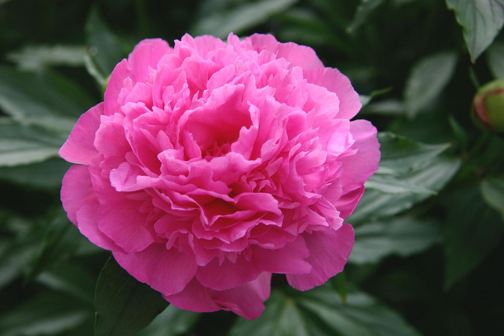 Mittwochsblüte