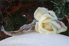 Mittwochsblüte-Bereifte-Rose
