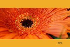 Mittwochsblüte vom 25.11.2020