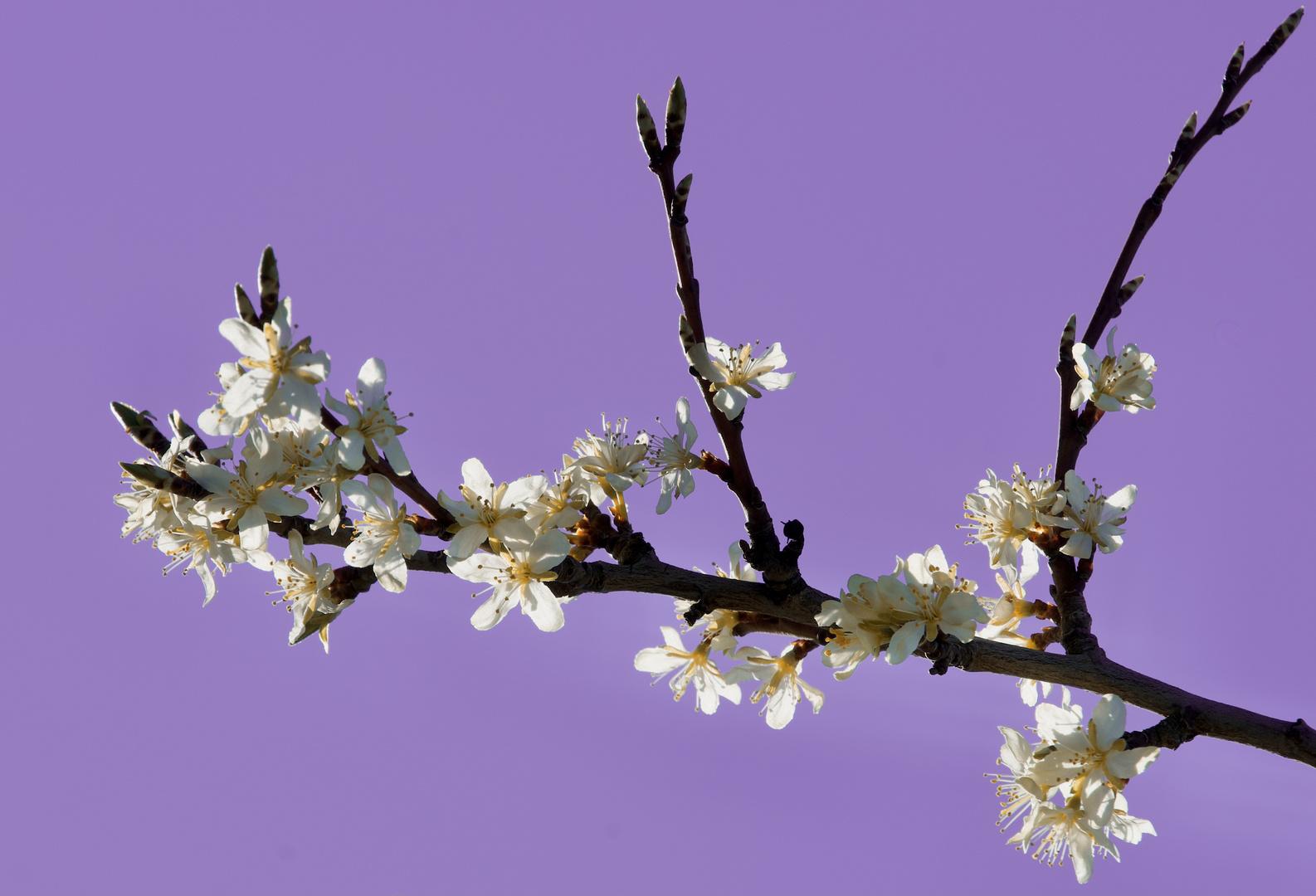 Mittwochsblüten