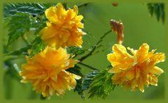 Mittwochsblumen ...