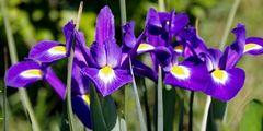 Mittwwochsblümchen